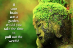 If Your Brain Was A Garden, Would You Take The Time To Pull Out The Weeds?